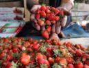 Ученые назвали фрукты, замедляющие старение кожи