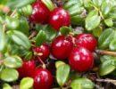 Врачи назвали ягоду, которая делает наше сердце здоровым