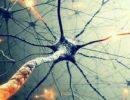 Ученые нашли в мозге нейроны, ответственные за расстройства пищевого поведения