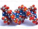 Клетки человека научили встраивать в белки неканонические аминокислоты