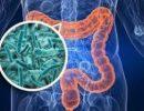 Ученые заявили о влиянии бактерий кишечника на память