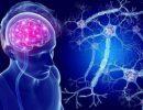Медики подсказали, как быстро восстановить нервные клетки