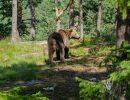 Туриста в Казахстане убила медведица