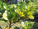 Ученые нашли растение, останавливающее коварную форму рака