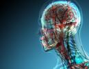 В теле человека обнаружен новый орган