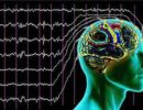Активность мозга певчих птиц синхронизировалась в дуэте